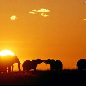 download africa_african_elephants_ …