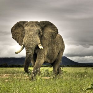 download Savanna Wallpapers – Full HD wallpaper search