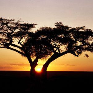 download Sunrise, Africa desktop wallpaper « Desktopia.