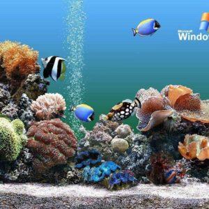 download Download Free Aquarium Backgrounds Windows Aquarium Wallpaper …