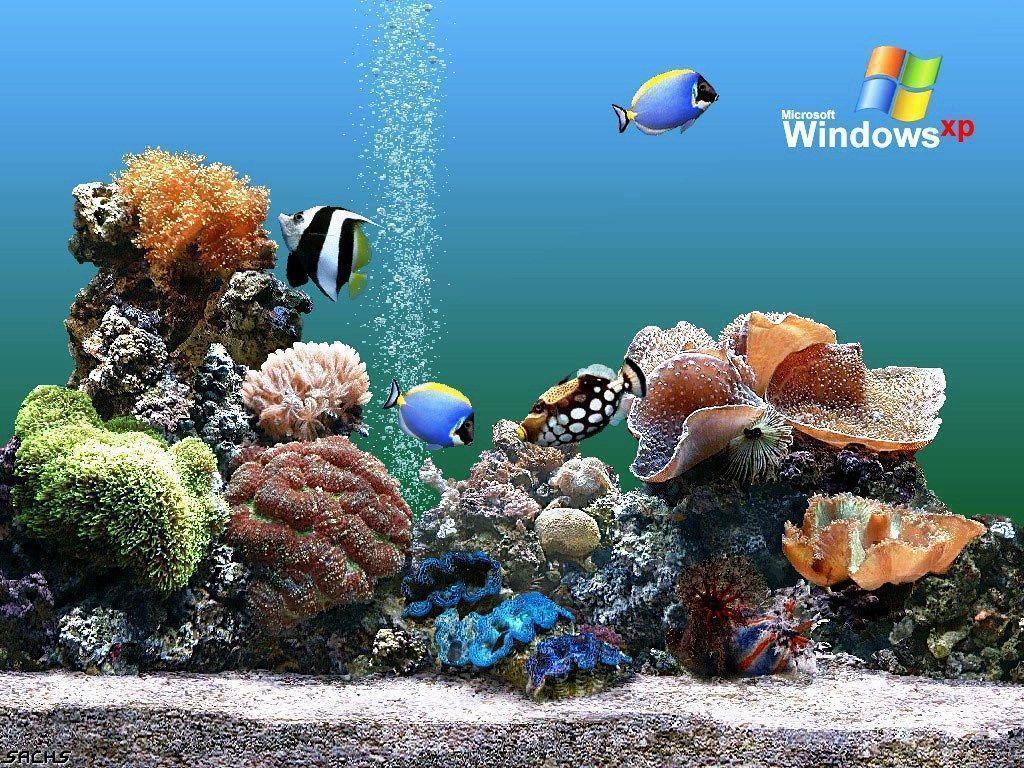 Download Free Aquarium Backgrounds Windows Aquarium Wallpaper …