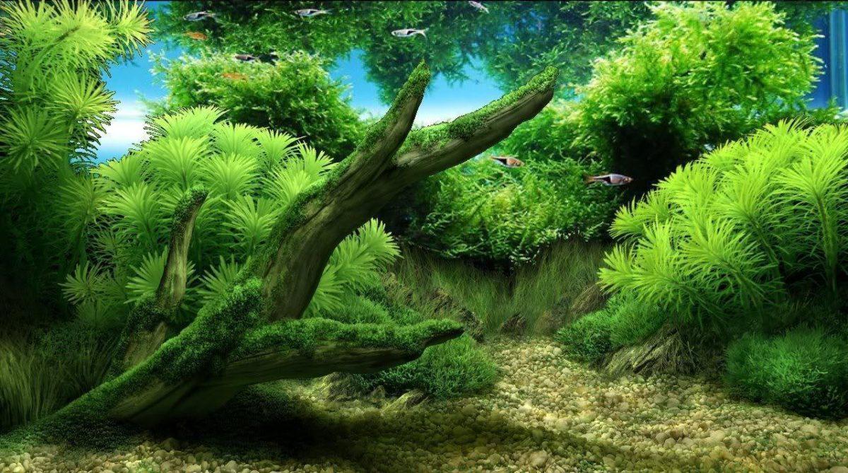 Aquarium Backgrounds 13 Desktop Background | WallFortuner.