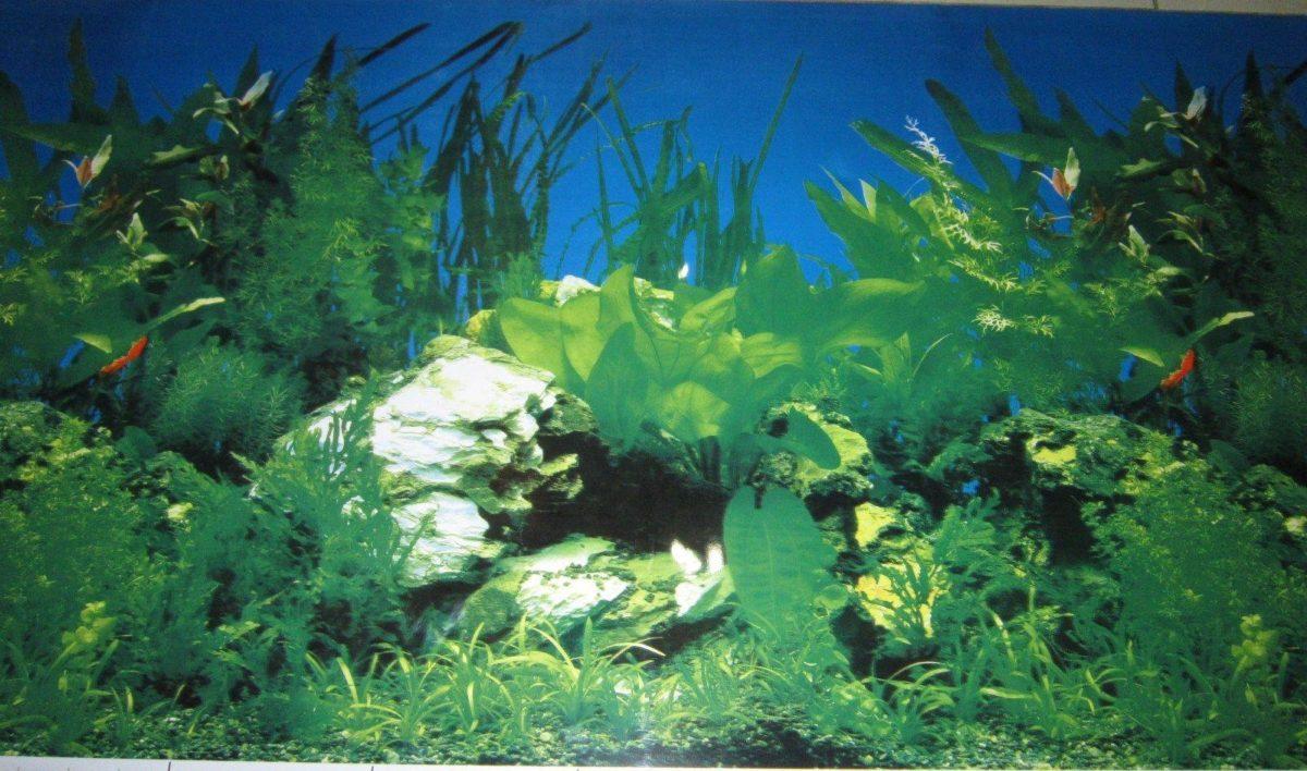 "Aquarium Background Decoration Planted and Driftwood 36"" x 23 5 …"