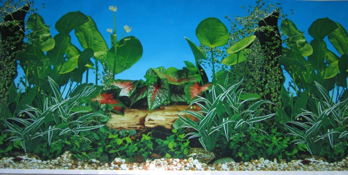 Details about Aquarium Background Decoration ornament 60 – Free …
