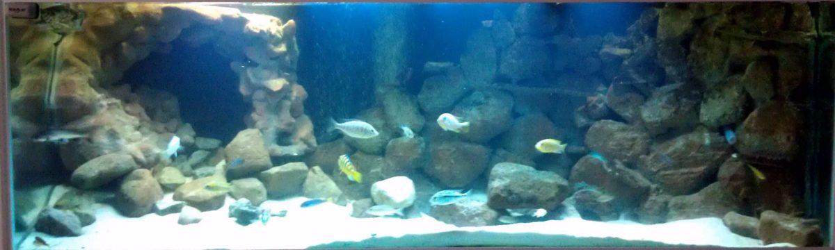 3D freshwater aquarium backgrounds – Aquarium Advice
