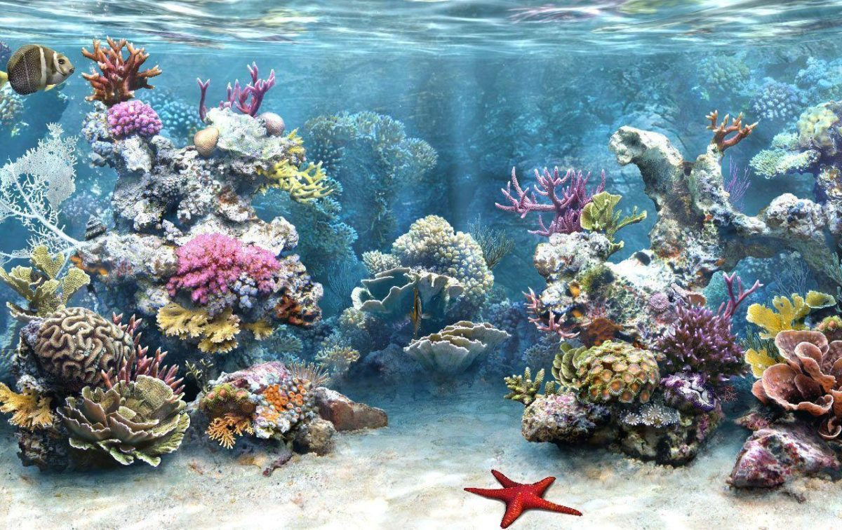HD Aquarium Background #8781021