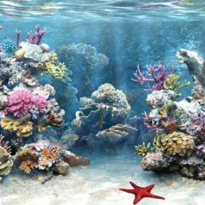 download HD Aquarium Background #8781021