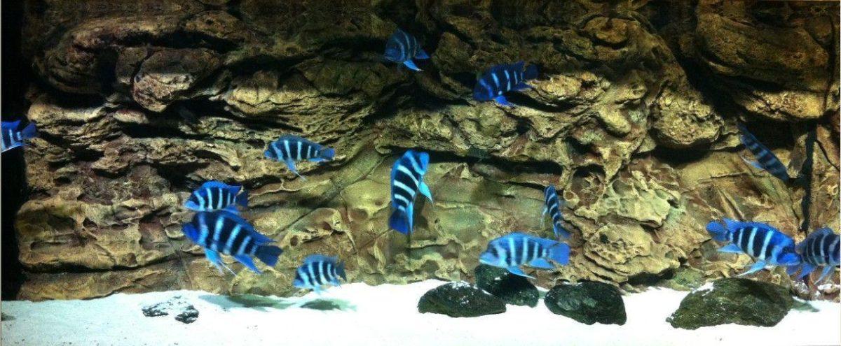 aquarium background from Grandarts Aqua Gardening Ltd B2B …