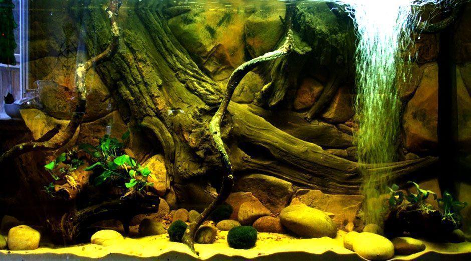 Aquarium Backgrounds and aquarium decoration ideasAquarium …