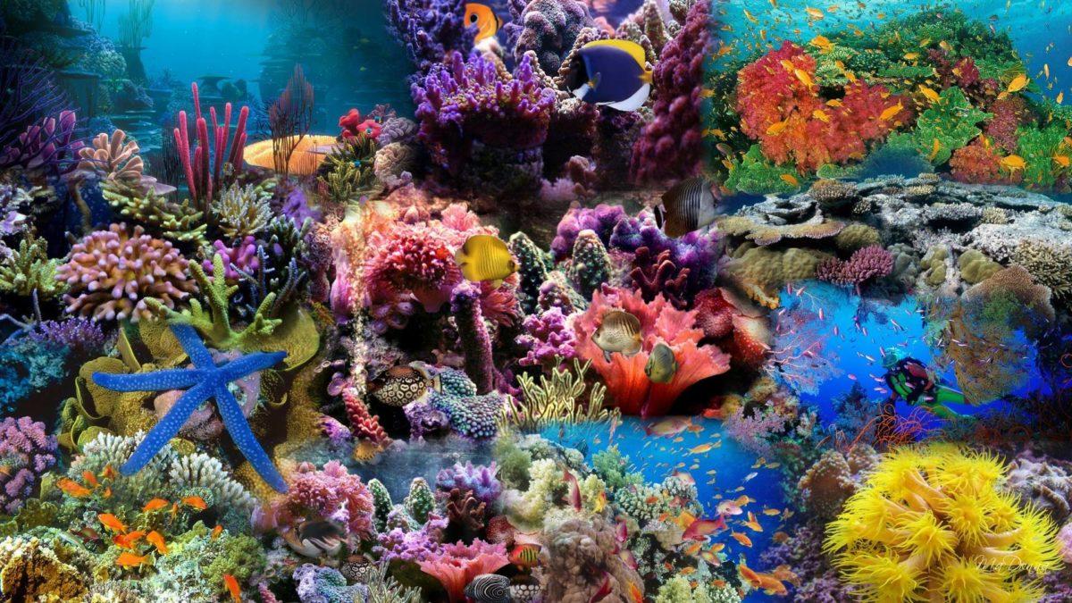 HD Aquarium Background Wallpaper