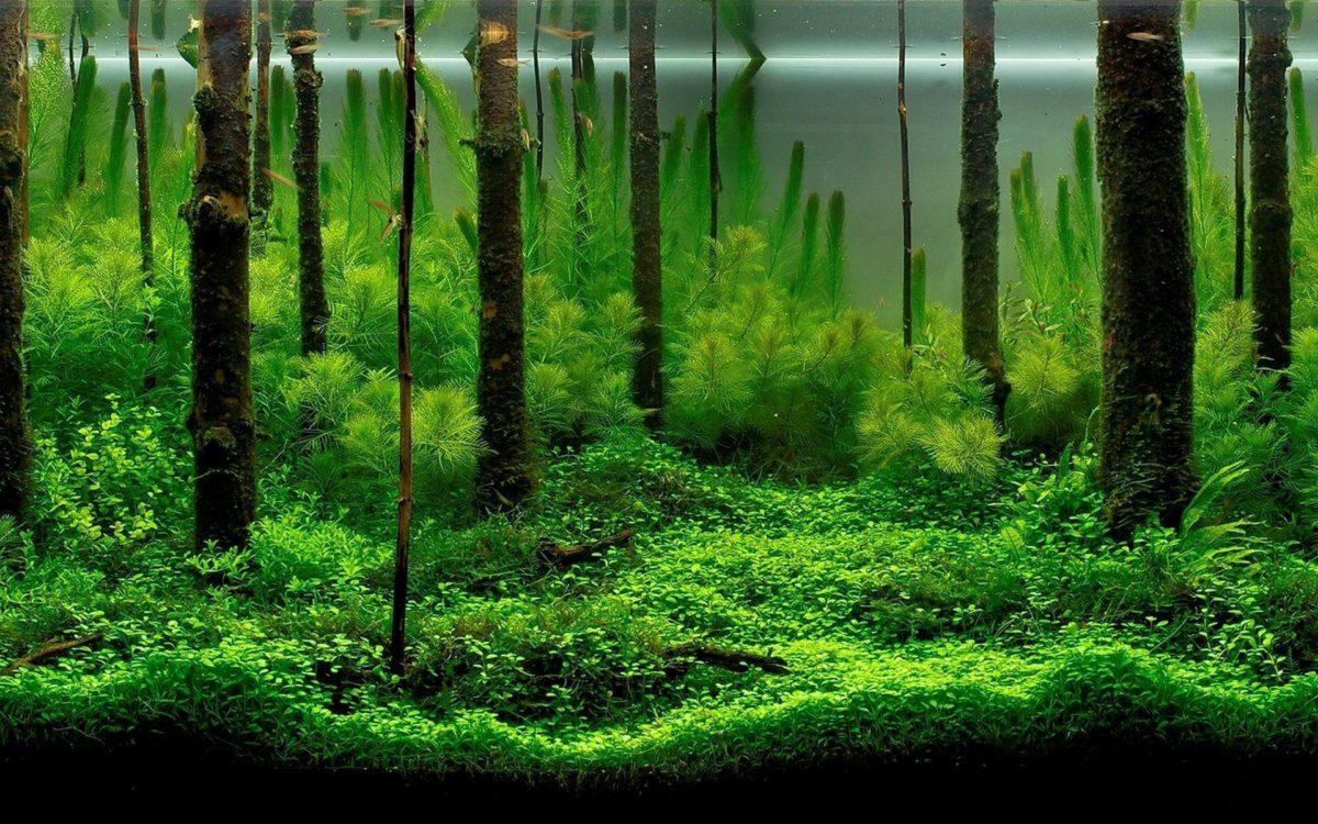 Wallpaper aquarium fish algae HD Wallpapers & Backgrounds aquariu