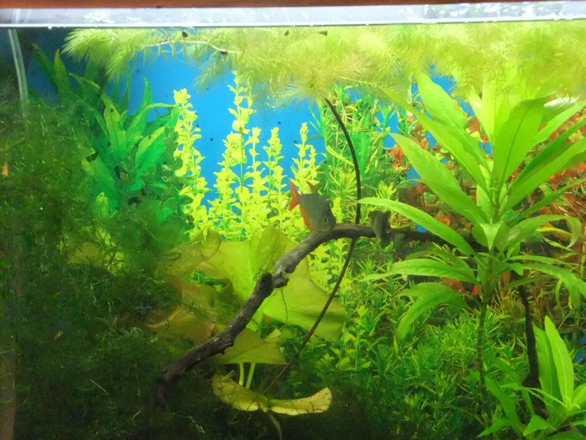 Brighten your aquarium background (Seaview) | A Practical …