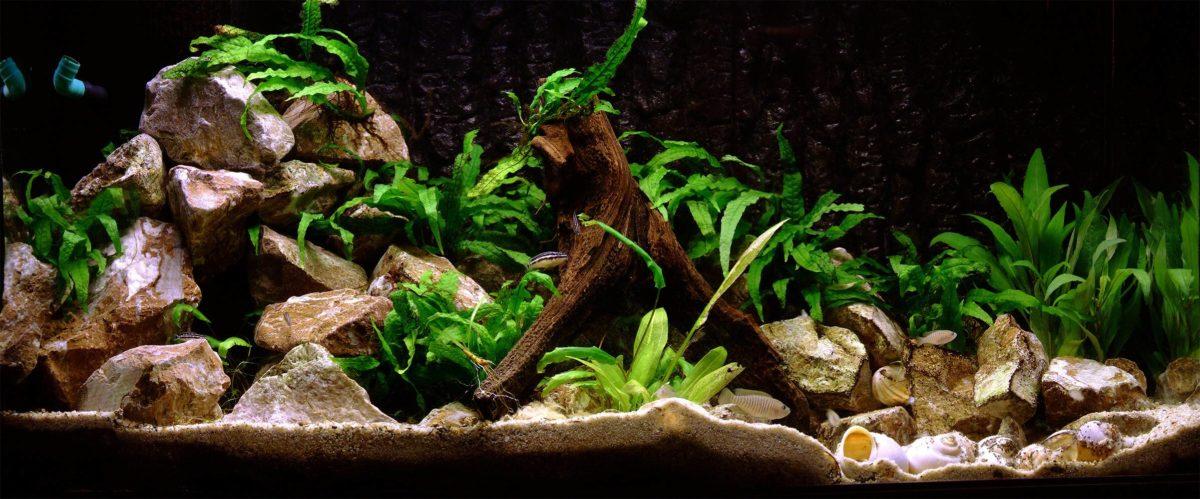 Aquarium Backgrounds 42 Desktop Background | WallFortuner.