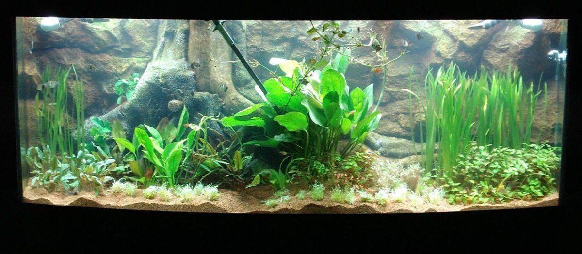 aquarium-backgrounds-3d.jpg