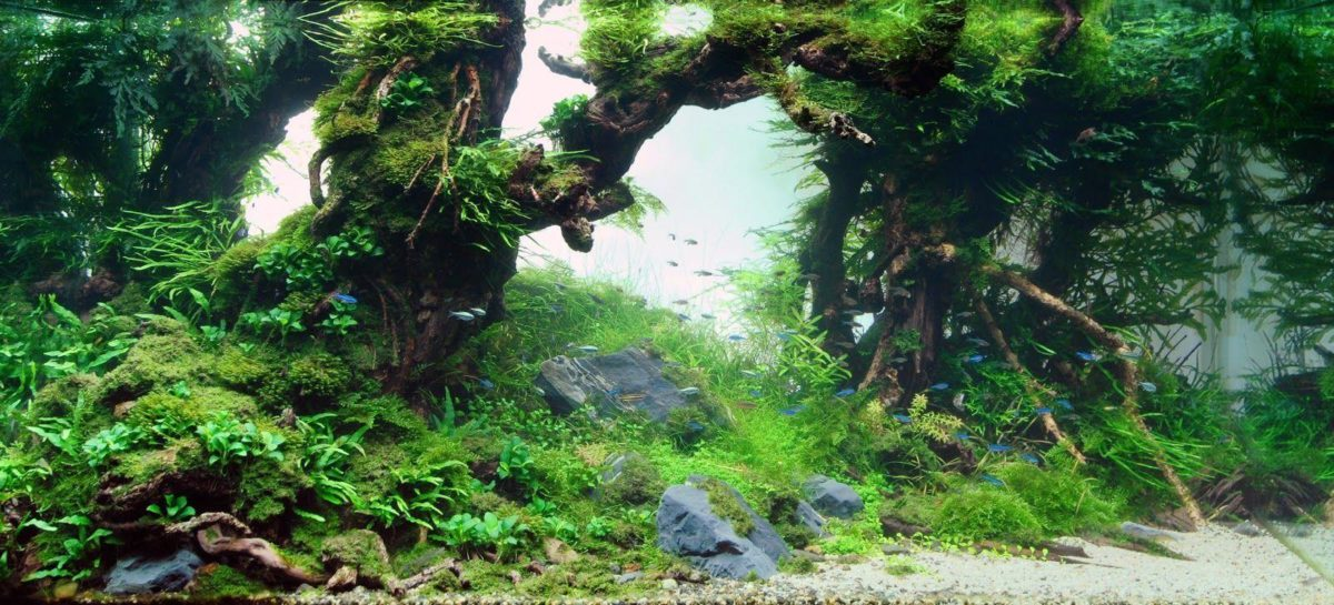 Background Poster Pics: Background Layouts For Aquarium