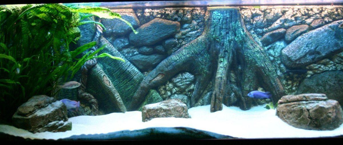 Aquarium Backgrounds 41 Desktop Background | WallFortuner.