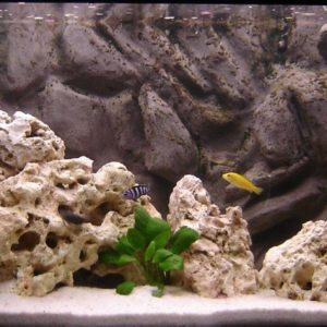download Do-It-Yourself Aquarium background