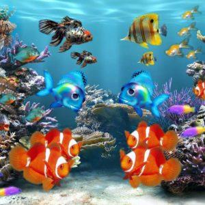 download Aquarium Backgrounds 11 Desktop Background | WallFortuner.
