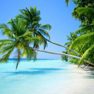 download Tropical Beach Wallpaper Widescreen Hd Pictures 4 HD Wallpapers …
