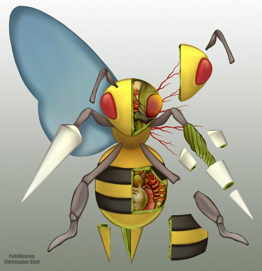 Beedrill Anatomy by Christopher-Stoll on DeviantArt