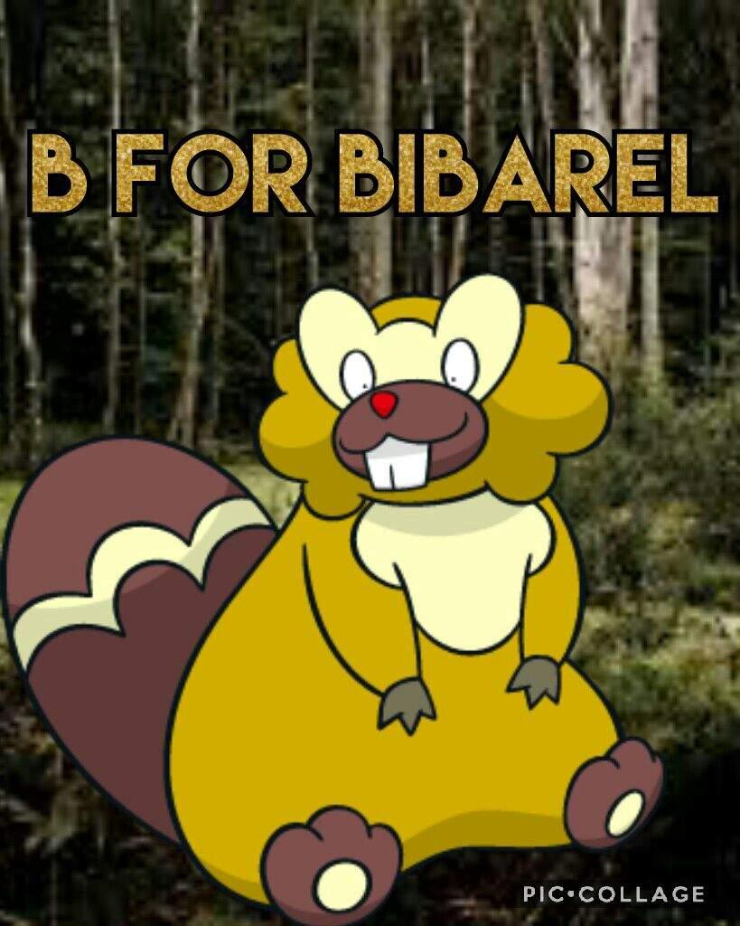 B for Bibarel | Shiny Pokemon Amino Amino
