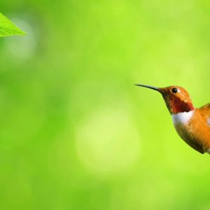 download A selection of 10 Images of Birds in HD quality