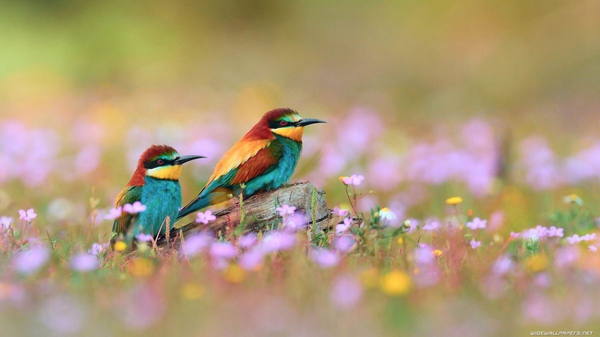 A selection of 10 Images of Birds in HD quality