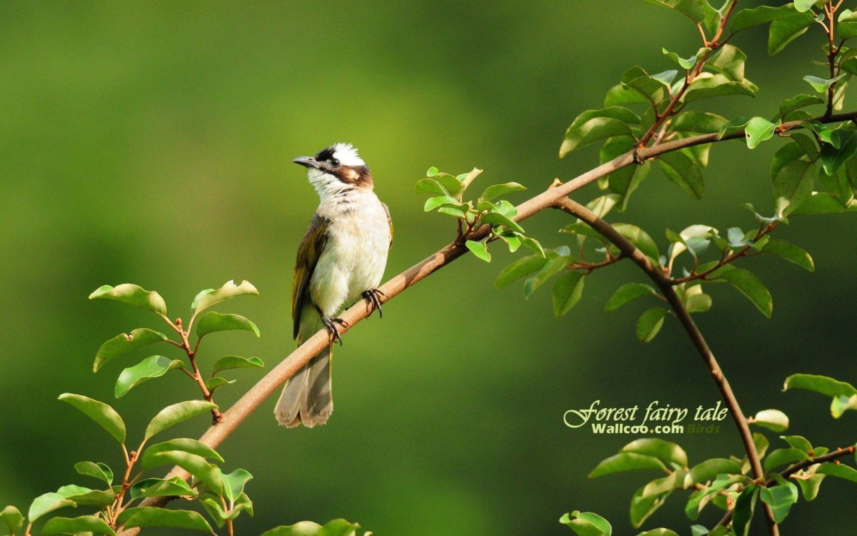Birds wallpaper – 710962