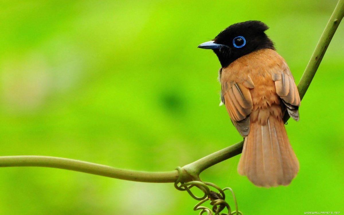 New wallpaper of birds – Dhoomwallpaper.com | Latest HD Wallpaper …
