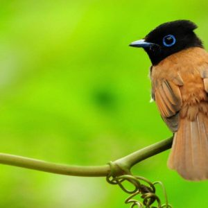 download New wallpaper of birds – Dhoomwallpaper.com | Latest HD Wallpaper …