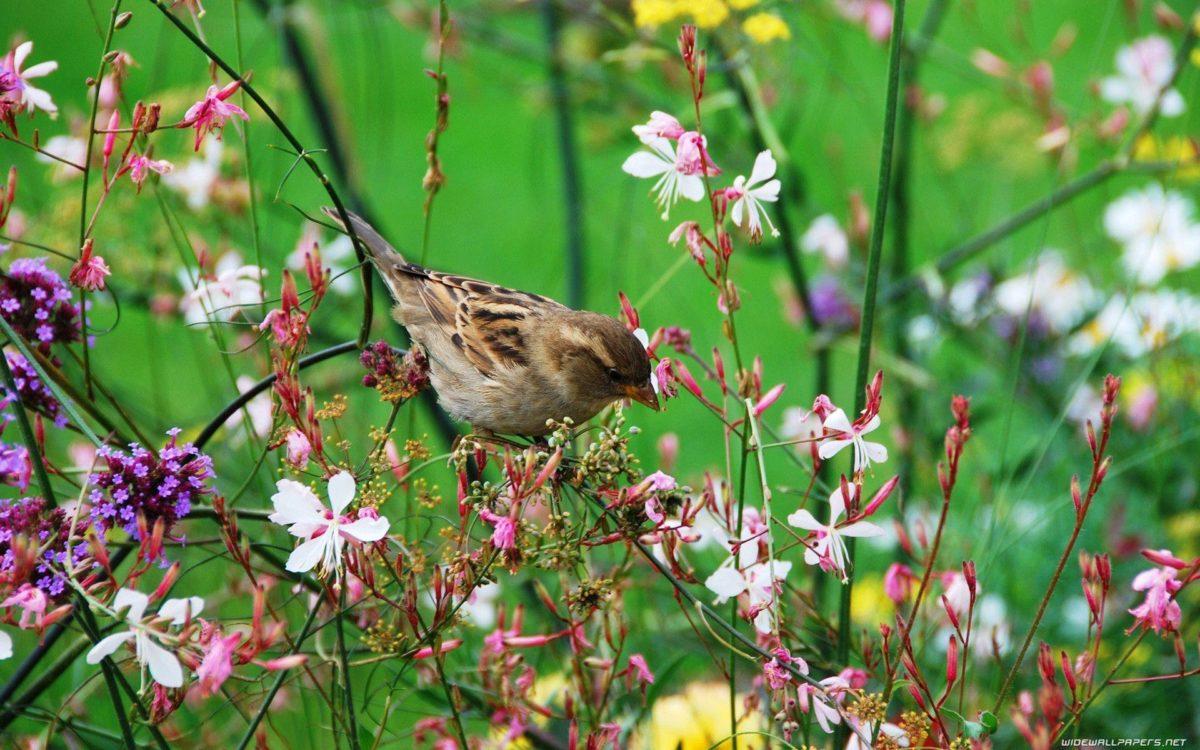Wallpaper birds minimalistic bird images – 1094368