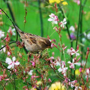 download Wallpaper birds minimalistic bird images – 1094368