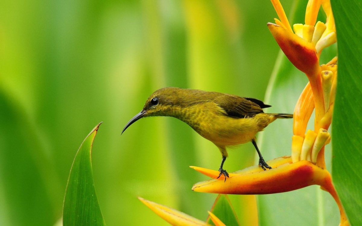 Spring Flowers And Birds Wallpaper Background 1 HD Wallpapers …