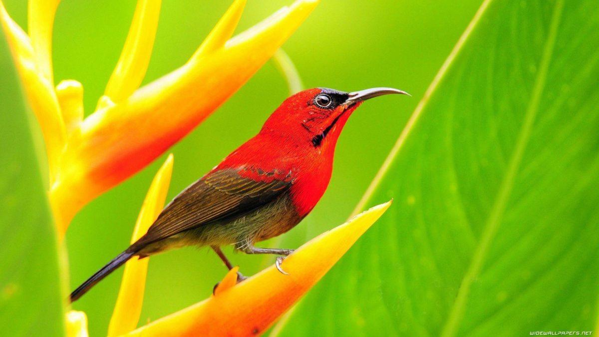 all.birds.wallpaper – Free Image