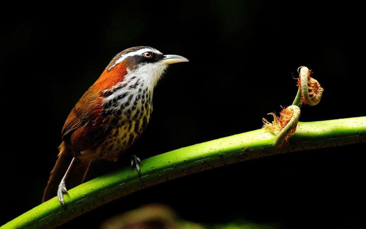 Cute bird wallpaper 18381 – Birds photo – Animal