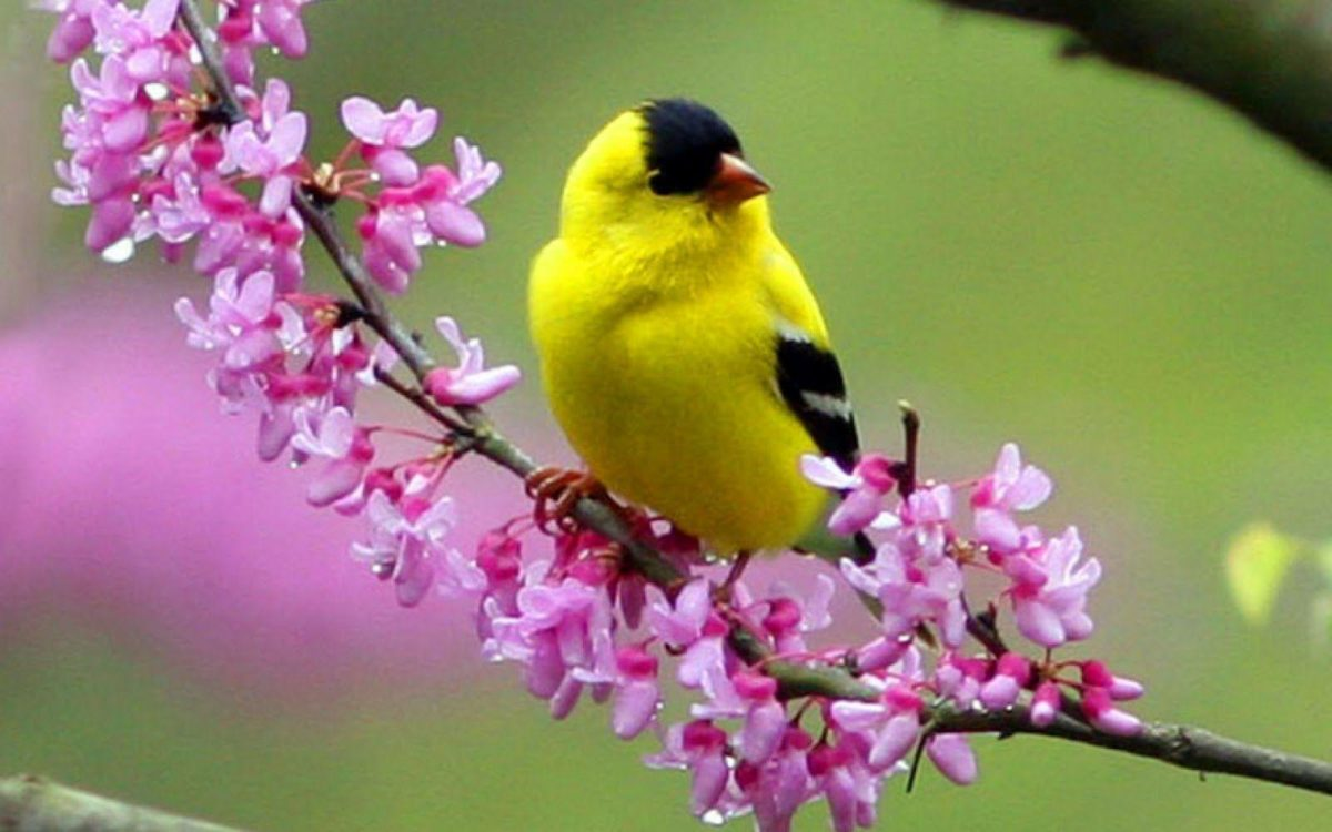 Colorful Little Bird HD Wallpaper – HD Wallpapers Inn