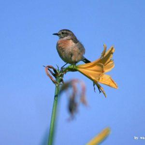 download Lovely Birds Wallpaper – Lovely Bird in Spring (Vol.1) 1024×768 NO …