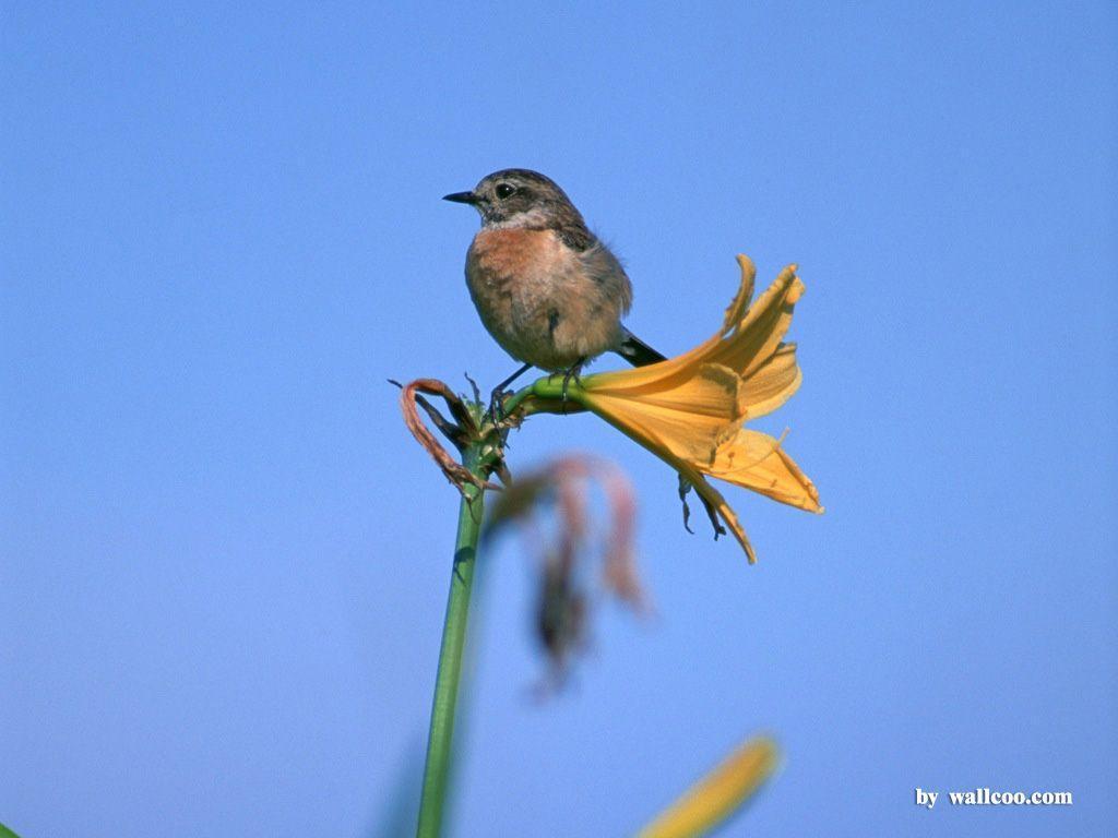 Lovely Birds Wallpaper – Lovely Bird in Spring (Vol.1) 1024×768 NO …