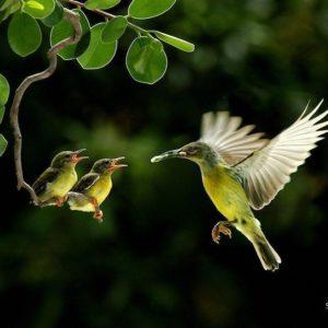 download Free Download Birds HD Wallpaper #209