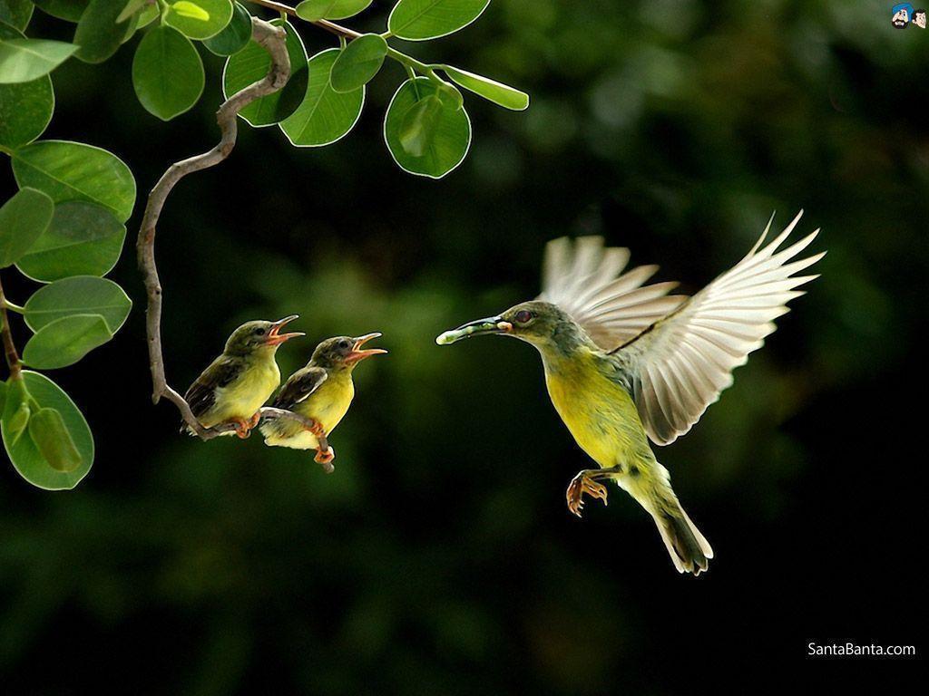 Free Download Birds HD Wallpaper #209