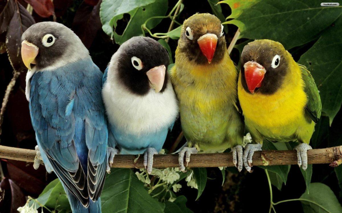 Birds wallpaper – 323378