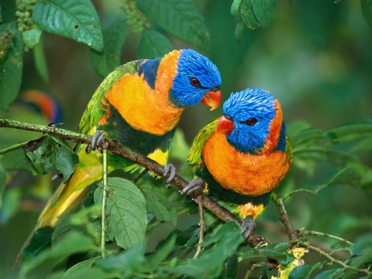 Birds hd wallpapers, bird wallpapers | Amazing Wallpapers