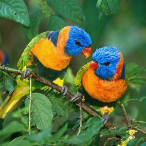 download Birds hd wallpapers, bird wallpapers   Amazing Wallpapers