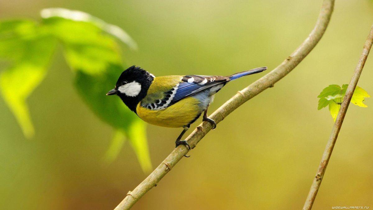 Desktop Wallpaper Birds HD. Birds, Birds Wallpaper, Birds …