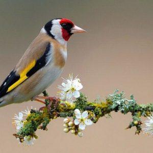 download Birds Flowers Wallpaper
