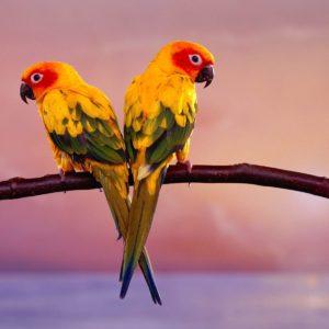 download Birds Desktop Wallpaper | Birds Picture, Photos | New Wallpapers