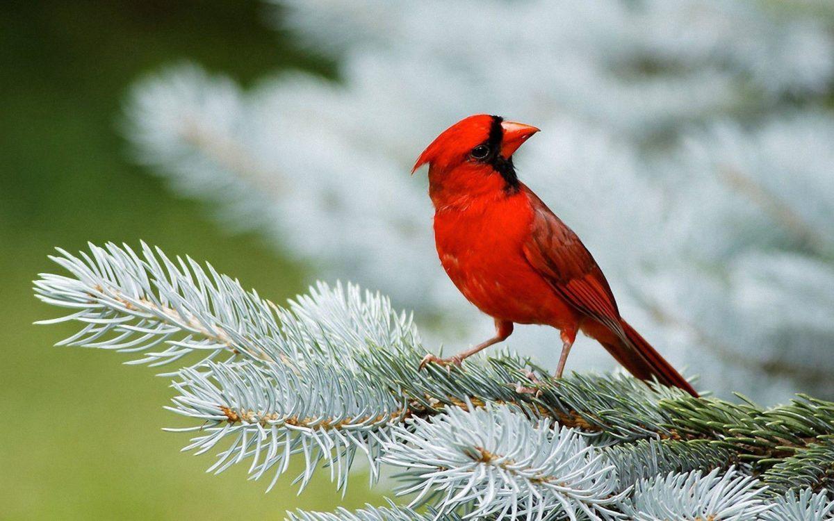 Birds Desktop Wallpaper | Birds Picture, Photos | New Wallpapers