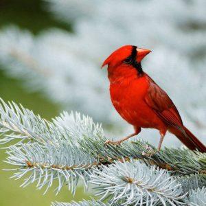 download Birds Desktop Wallpaper   Birds Picture, Photos   New Wallpapers