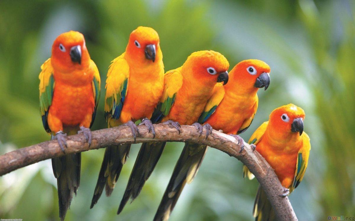 HD Birds Wallpapers | Sky HD Wallpaper