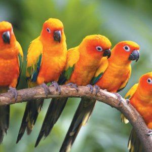 download HD Birds Wallpapers | Sky HD Wallpaper